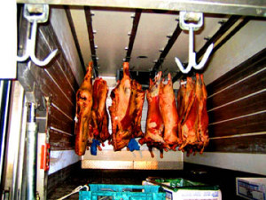 image of carcases hanging in truck