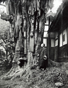 image of old chinese man under ancient tree